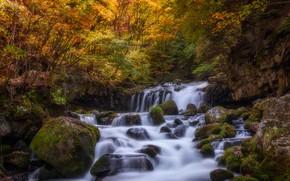 Картинка осень, лес, листья, вода, свет, деревья, ветки, камни, скалы, заросли, листва, водопад, мох, поток, каскад, …