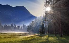 Картинка лес, лето, туман, утро