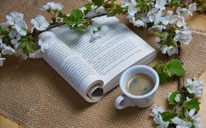 Картинка цветы, кофе, ветка, чашка, книга