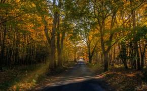 Картинка осень, деревья, листва, Германия, дорожка, парк Мюриц