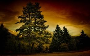 Обои пейзаж, ночь, природа