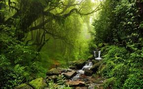 Картинка лес, деревья, природа, ручей, камни, тропинка