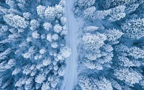 Картинка Nature, Winter, Landscape, Snow, Trees