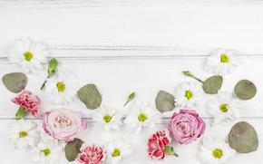 Картинка белый, цветы, фон, бутоны, flower, wood, roses