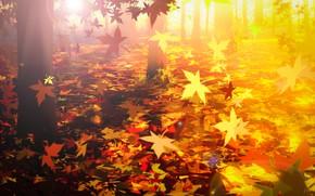 Картинка осень, лес, листопад