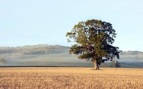 Картинка поле, осень, туман, дерево, утро