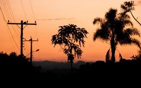 Обои деревья, вечер, зарево