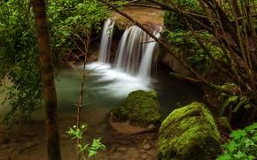 Картинка зелень, листья, ветки, природа, камни, дерево, берег, водопад, мох, поток, дно, ствол, кусты, водоем, валуны, …
