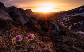 Обои природа, горы, свет, цветы