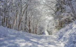 Картинка зима, дорога, снег, деревья, день