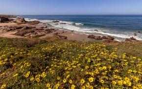 Картинка песок, море, волны, пляж, лето, небо, цветы, камни, берег, побережье, поляна, вид, желтые, горизонт, прибой, …