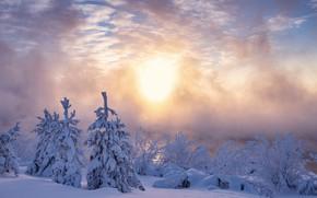 Картинка зима, снег, утро, ели, мороз, сугробы, Россия, кусты, морозное утро, Печора, Печорское водохранилище, Республика Коми