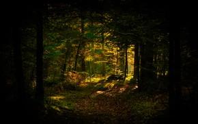 Картинка осень, лес, свет, деревья, ветки, темный фон, стволы, листва, полумрак, тропинка, оконце