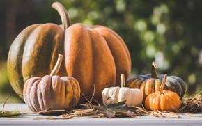 Картинка осень, листья, свет, доски, урожай, большая, маленькие, тыквы, тыква, солома, много, разные, боке, тыковки