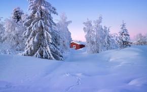 Картинка зима, снег, деревья, пейзаж, природа, дом, ели, Швеция, Андрей Базанов