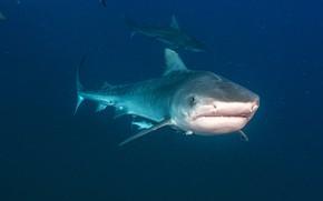 Картинка море, синева, акулы, подводный мир