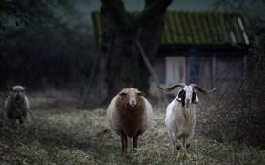 Картинка животные, трава, взгляд, ветки, дом, темный фон, дерево, две, избушка, круто, сад, деревня, двор, дружба, …