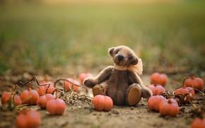 Картинка поле, осень, трава, детство, зеленый, фон, поляна, игрушка, игрушки, сад, медведь, мишка, тыквы, медвежонок, сидит, ...