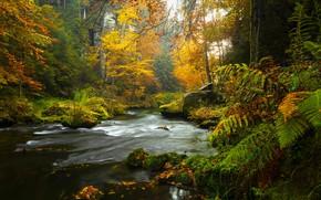 Картинка лес, деревья, камни, мох, речка