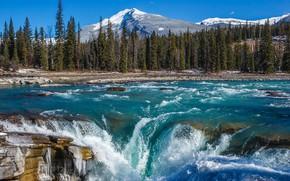 Картинка лес, горы, река, водопад, Канада, Альберта, Alberta, Canada, Jasper National Park, Скалистые горы, Национальный парк …