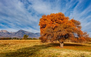 Картинка United States, California, Sierra Trailer Park
