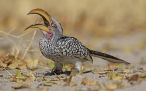 Картинка природа, птица, DUELL ©, открытый клюв