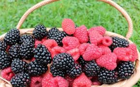 Картинка ягоды, малина, корзина, ежевика