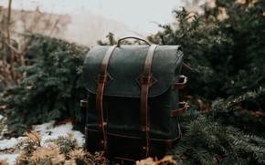 Картинка ель, хвоя, рюкзак
