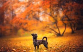 Картинка осень, друг, собака