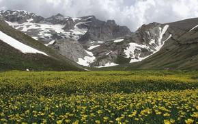 Картинка sky, flowers, mountain