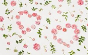 Картинка любовь, цветы, сердце, лепестки, love, heart, pink, flowers, beautiful, romantic, valentine, petals, floral