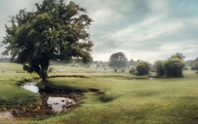 Картинка туман, дерево, речка