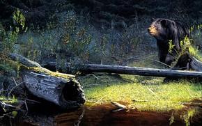 Картинка лес, взгляд, природа, берег, рисунок, картина, медведь, арт, бревно, живопись, водоем, барибал, Brent Townsend