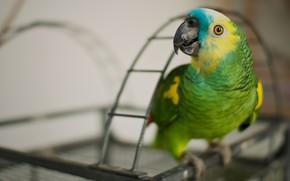 Картинка взгляд, зеленый, фон, птица, размытие, дуга, клетка, попугай, боке, яркое оперение, жако
