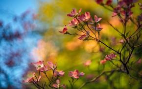 Картинка цветы, ветки, яркий, фон, весна, розовые, ярко, цветение, боке, кизил