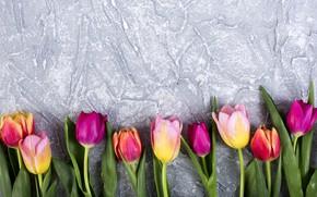 Картинка цветы, colorful, тюльпаны, flowers, tulips, spring