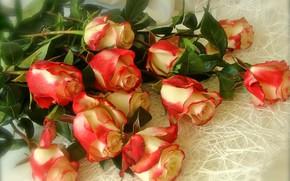Картинка розы, букет, оранжевые