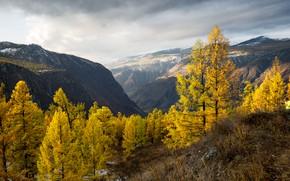 Картинка осень, деревья, пейзаж, горы, природа, долина, Алтай