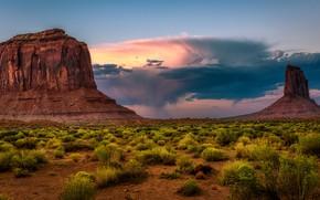 Обои песок, небо, облака, горы, камни, скалы, растительность, пустыня, останки, США, Америка, пни, кустарники, кустики, грозовые, ...