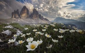 Картинка облака, пейзаж, цветы, горы, природа, Италия, травы, анемоны, Tre Cime di Lavaredo, Доломиты, Roberto Aldrovandi