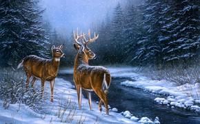 Картинка зима, иней, лес, взгляд, снег, ночь, ветки, природа, поза, туман, ручей, рисунок, картина, олень, ели, …
