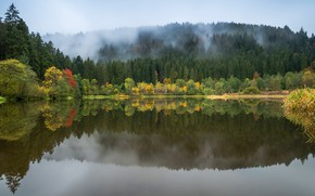 Картинка осень, лес, небо, деревья, пейзаж, природа, туман, озеро, отражение, берег, желтые, ели, водоем, водная гладь, …