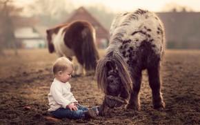 Картинка природа, мальчик, пони