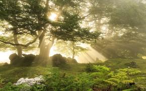 Картинка лес, свет, природа
