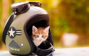 Картинка кошка, взгляд, оранжевый, желтый, котенок, фон, малыш, рыжий, очки, шлем, котёнок, боке, малютка