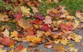 Картинка осень, листья, colorful, клен, autumn, leaves, maple