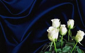 Картинка цветы, темный фон, рендеринг, коллаж, рисунок, картинка, холст, белые розы, складки ткани, синий шелк