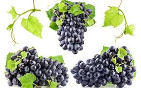 Картинка листья, капли, мокрый, чёрный, виноград, белый фон, грозди