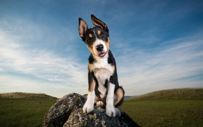 Картинка небо, взгляд, друг, камень, собака, щенок
