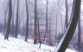 Картинка зима, лес, деревья